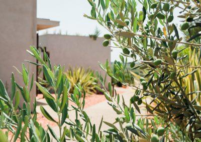 Des gîtes entourés d'oliviers