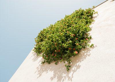 Plantes et architecture se côtoient