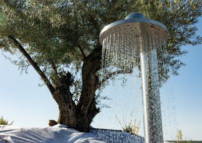 L'olivier, l'arbre emblématique des gîtes du Mas Palat à Gignac